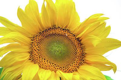 Photograph - Sunny Flower 1 by Jenny Rainbow