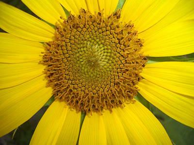 Sunny Flower Original