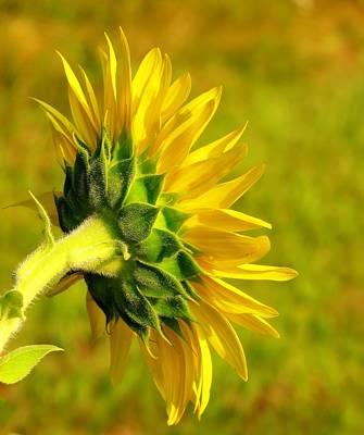Photograph - Sunny Flower by MTBobbins Photography