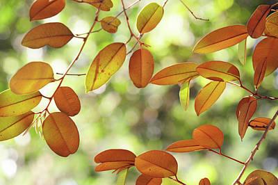 Photograph - Sunny Foliage by Jenny Rainbow