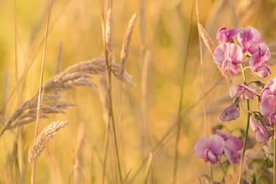 Photograph - Sunny Garden 2 by Bonnie Bruno
