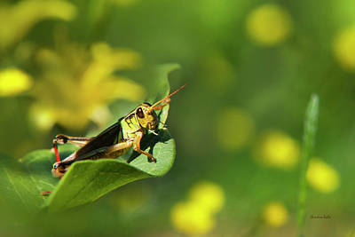 Grasshopper Photograph - Green Grasshopper by Christina Rollo