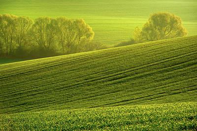 Sunny Green Art Print