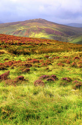 Photograph - Sunny Hills. Wicklow. Ireland by Jenny Rainbow