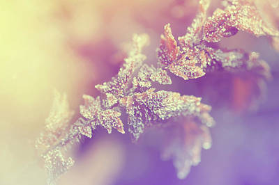Photograph - Sunny Joy. Frozen Leaf. Natural Wonder by Jenny Rainbow