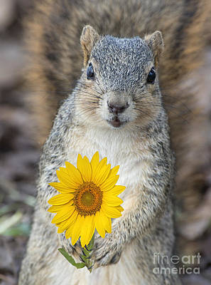 Funny Squirrel Photograph - Sunny Little Squirrel by Bonnie Barry