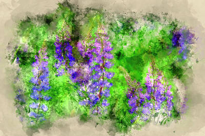 Watercolor Simulation Photograph - Sunny Lupines by Ronn Orenstein