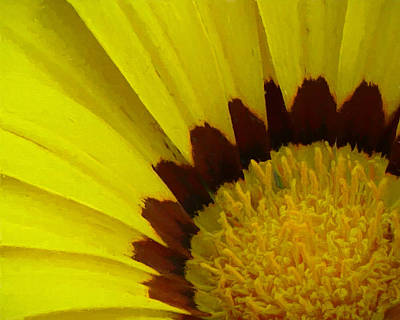 Close Up Photograph - Sunny by Marcia Colelli