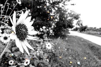 Photograph - Sunny by Marisela Mungia
