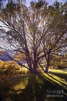 Sunny Mono Tree Art Print by Norman  Andrus