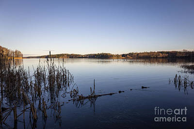 Photograph - Sunny November Day At Lake With Migration Birds by Ismo Raisanen