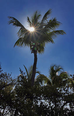 Photograph - Sunny Palm by Bob Slitzan