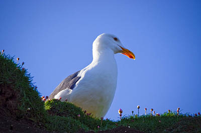 Photograph - Sunny Perch by Adria Trail