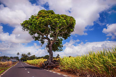 Photograph - Sunny Road In Mauritius  by Jenny Rainbow