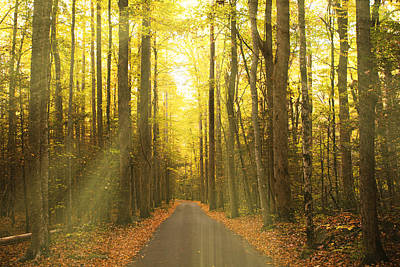 Tennessee Historic Site Photograph - Sunny Roaring Fork Road by Jonas Wingfield