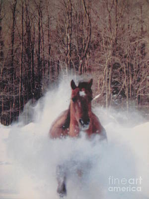 Crazy Horse Photograph - Sunny Running For The Barn. by Jeffrey Koss