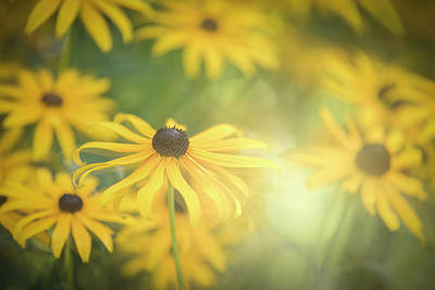 Photograph - Sunny Side by Kim Carpentier