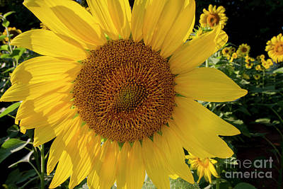 Photograph - Sunny Side Up by Chris Scroggins