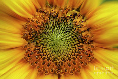 Sunny Side Up Photograph - Sunny Side Up by Sari Sauls