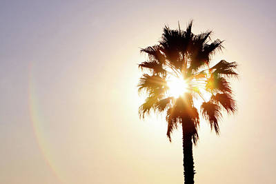 Photograph - Sunny Southern California by Art Block Collections