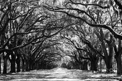 Tree-lined Photograph - Sunny Southern Day - Black And White by Carol Groenen