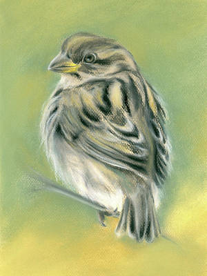 Pastel - Sunny Sparrow by MM Anderson