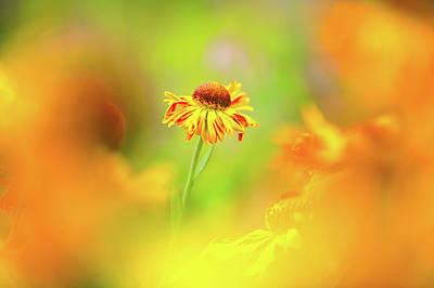 Photograph - Sunny Spirit by Sarah-fiona Helme