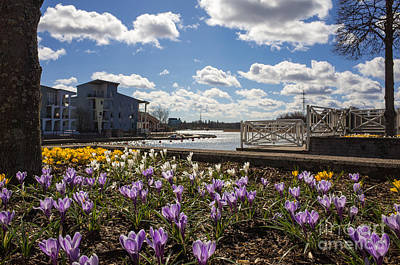 Photograph - Sunny Spring Flowers In Helsinki by Ismo Raisanen