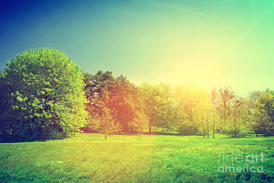 Shine Photograph - Sunny Summer Green Landscape by Michal Bednarek