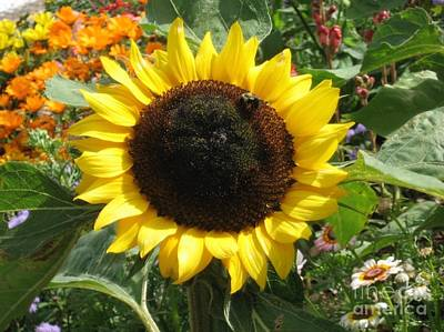 Sunny Sunflower With Bee Amid Flower Patch Art Print