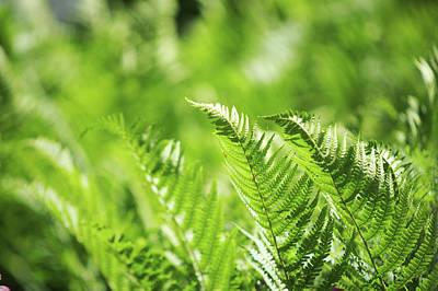 Photograph - Sunny Wind. Green World  by Jenny Rainbow