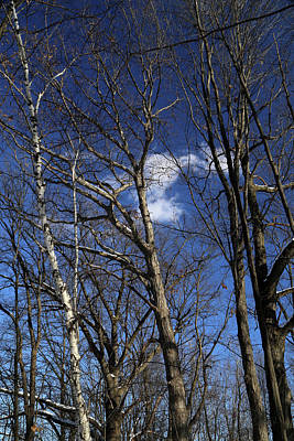 Photograph - Sunny Winter Day With One Cloud by Mary Bedy