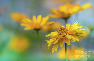 Photograph - Sunny Yellow by Eva Lechner