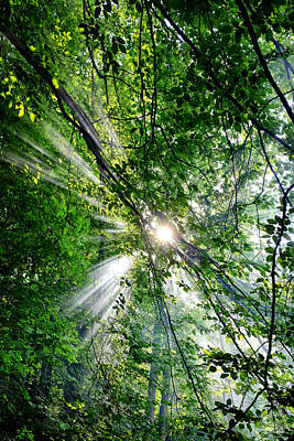 Photograph - Sunrays by Fabrizio Troiani