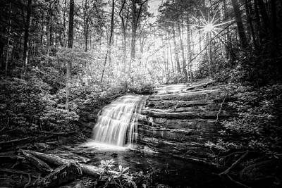 Photograph - Sunrays In The Forest Black And White by Debra and Dave Vanderlaan