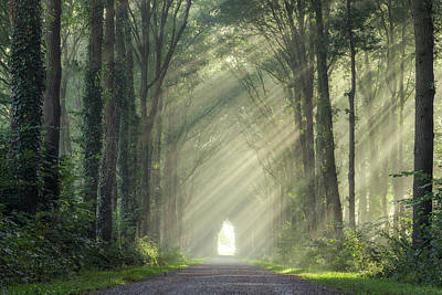 Photograph - Sunrays In The Forest by Edwin Mooijaart