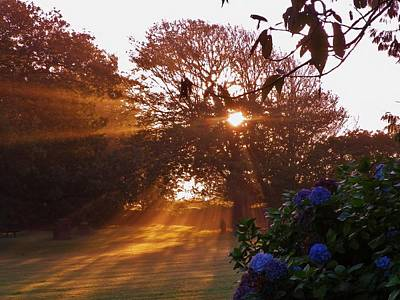 Photograph - Sunrays On A Misty Autumnal Morning In Devon by Richard Brookes