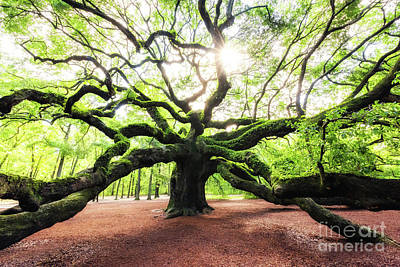 Photograph - Sunris At Angel Oak Tree by Michael Ver Sprill