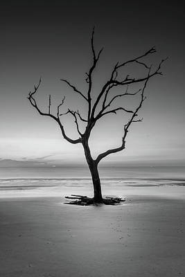 Photograph - Sunrise And A Driftwood Tree In Black And White by Greg Mimbs