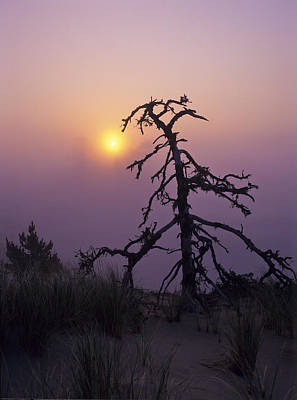 Photograph - Sunrise And Fog by Robert Potts