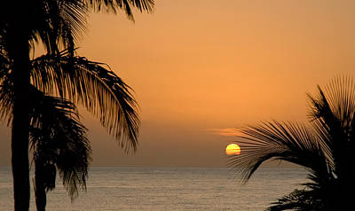 Photograph - Sunrise And Palms by Mick Burkey
