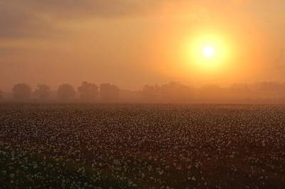 Sunrise And The Cotton Field Art Print