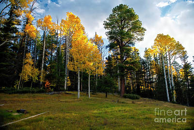 Photograph - Sunrise Aspen Meadow by David Arment