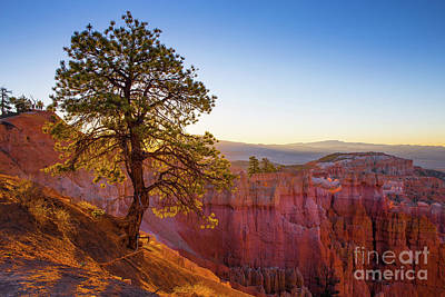 Photograph - Sunrise At Bryce Canyon National Park Utah by Edward Fielding