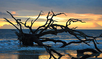 Sunrise At Driftwood Beach 1.1 Art Print