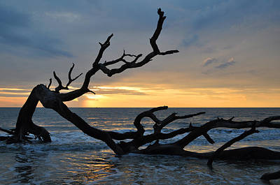 Sunrise At Driftwood Beach 1.2 Art Print