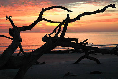 Sunrise At Driftwood Beach 3.1 Art Print