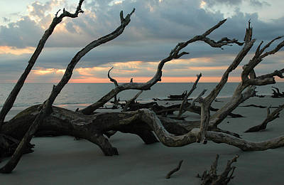 Sunrise At Driftwood Beach 4.1 Art Print