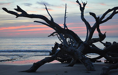 Sunrise At Driftwood Beach 5.1 Art Print