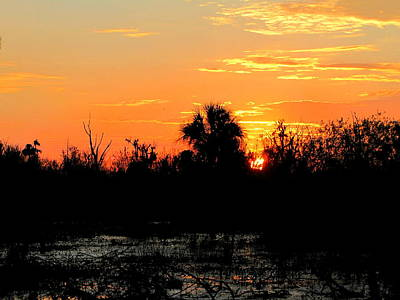 Photograph - Sunrise At The Circle B Bar Reserve  by Chris Mercer